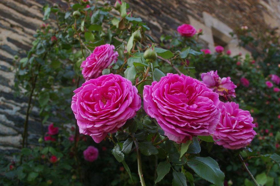 Jardin Remarquable en Ardèche